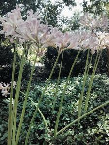 tall flowers